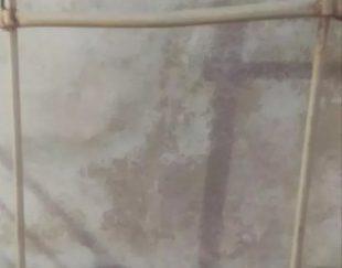 دار قالی
