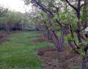 باغچه 2700متر سیب