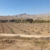 باغ وزمین کشاورزی