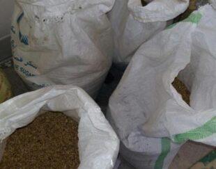 گندم محلی گونی شده