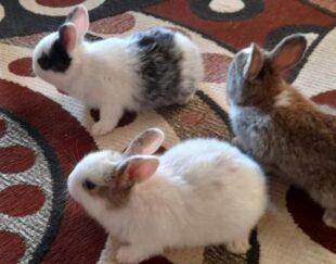 بچه خرگوش 15 عدد