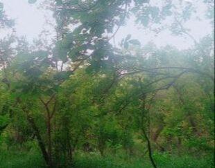 باغ ثمری انار
